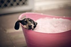 Собака_в ванне