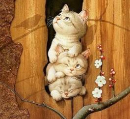 апрельские котята