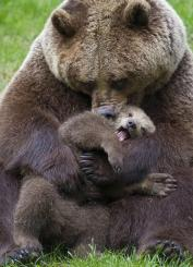 Мама-медведица