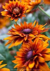 октябрьские цветы