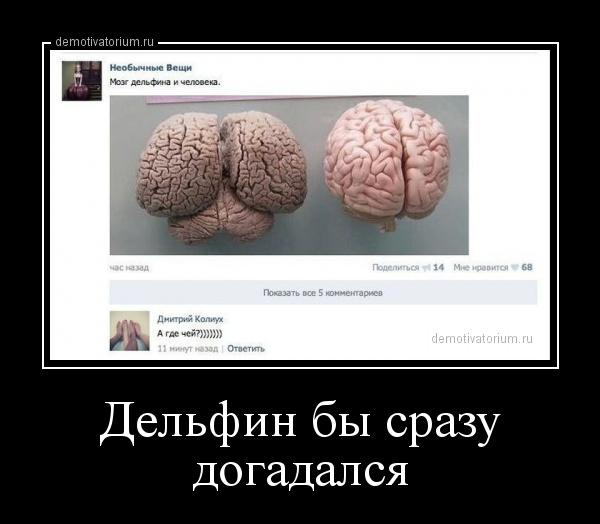 Мозг дельфина и человека
