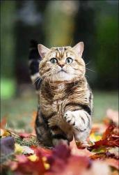 кот в сентябре