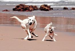 Собака-разгоняка