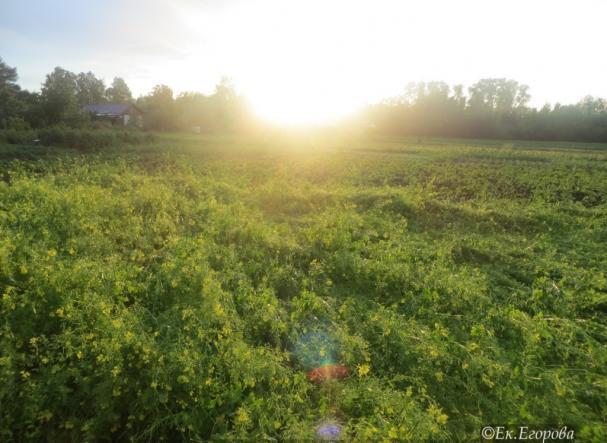Радуга в поле