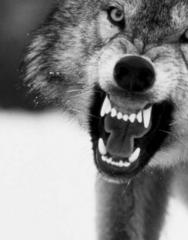 Злая_волчица