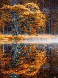 осень. отражение